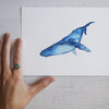Blue Humpback Whale by Karliefie