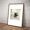 Deceased Bee A3 Photographic Print by Wolf & Whale