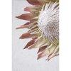 Blush Pink King Protea Wall Art Print Set | Collection 3 | A1 (60x90cm) by Sonny Mo Arts