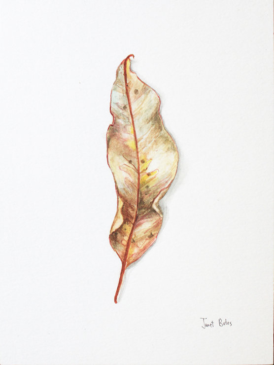 Peace Leaves - original watercolour paintings by Janet Botes