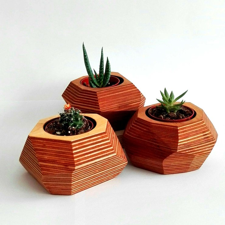 Mini Cacti and succulents  by Modern Gesture